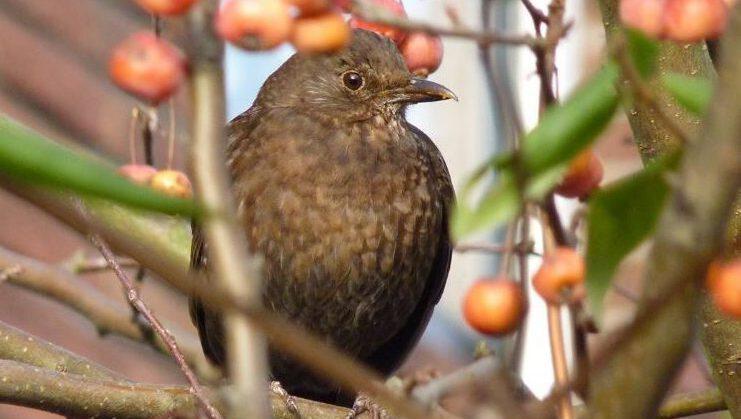 Vogels in de tuin? Zorg voor voedsel
